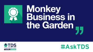 AskTDS blog image - Monkey business in the garden